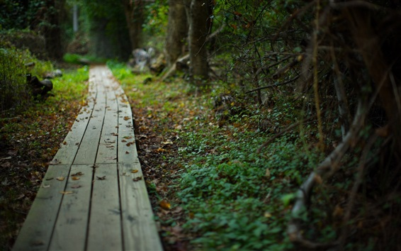 Обои Деревянный путь, листья, размытые