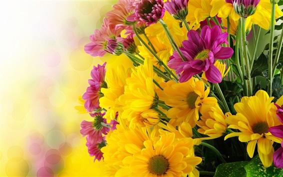 Wallpaper Yellow and purple chrysanthemum flowers