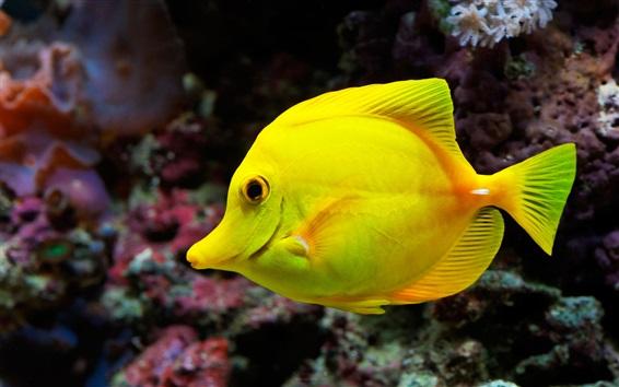 Papéis de Parede Peixe amarelo, mar, subaquático