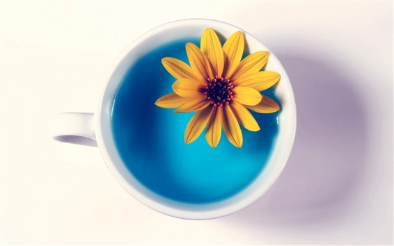 Wallpaper Yellow flower in cup, blue water