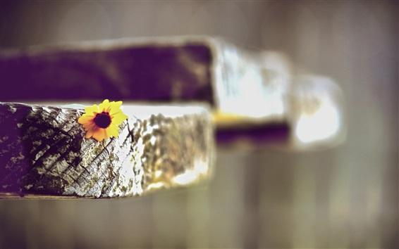 Обои Желтый цветок, дерево, размытое