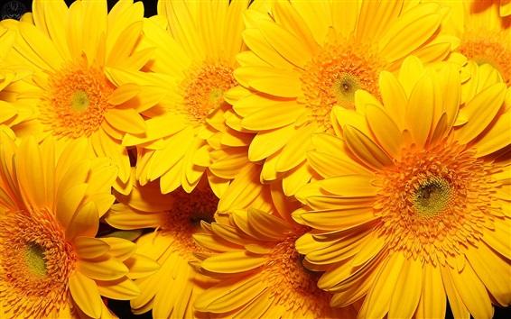 Fondos de pantalla Flores amarillas macro fotografía, hermosa