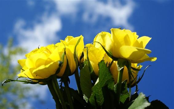 Fond d'écran Rose jaune, ciel bleu
