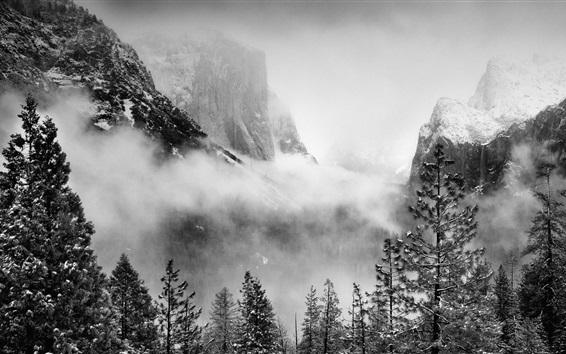 Fond d'écran Yosemite National Park, USA, arbres, montagnes, neige, brouillard, hiver
