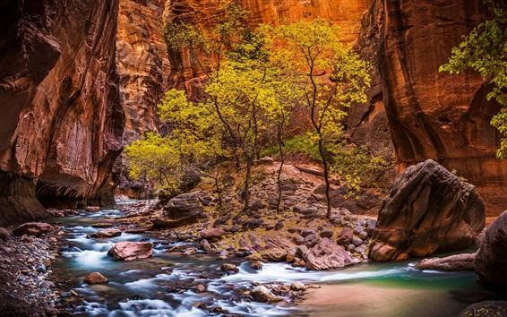 Papéis de Parede Parque nacional de Zion, córrego, pedras, árvores, EUA