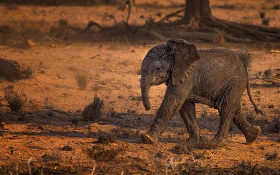 Fond d'écran Africain, bébé éléphant