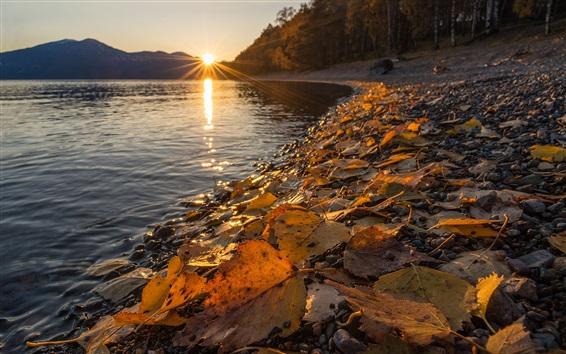 Wallpaper Altai Nature Reserve, Lake Teletskoye, yellow leaves, autumn, sunset, Russia