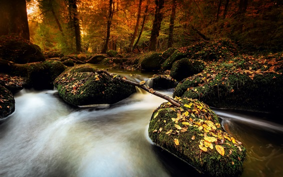 Fond d'écran Automne, pierres, mousse, ruisseau, feuilles, forêt