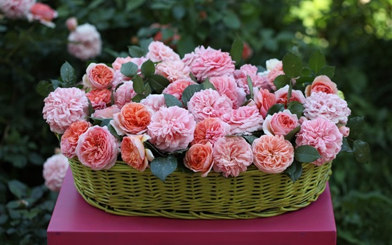 Wallpaper Basket, beautiful pink rose flowers