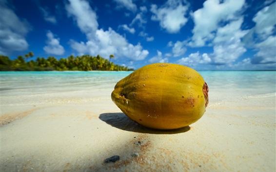 壁纸 海滩,椰子,海