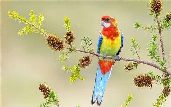 Papéis de Parede Papagaio bonito, penas coloridas, galhos
