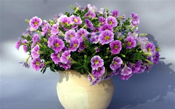 배경 화면 아름 다운 보라색 petunias 꽃, 꽃병