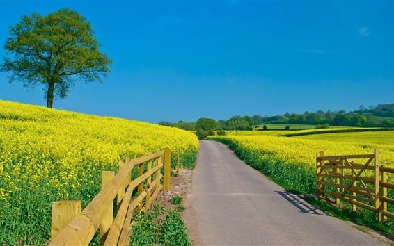 Обои Красивое желтое поле рапса, забор, голубое небо