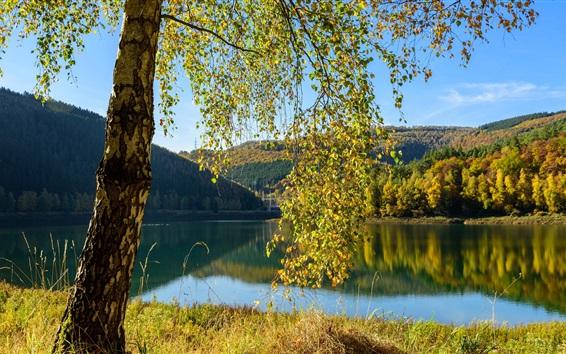 Wallpaper Belgium, lake, trees, autumn