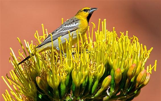 Papéis de Parede Pássaro em pé na flor