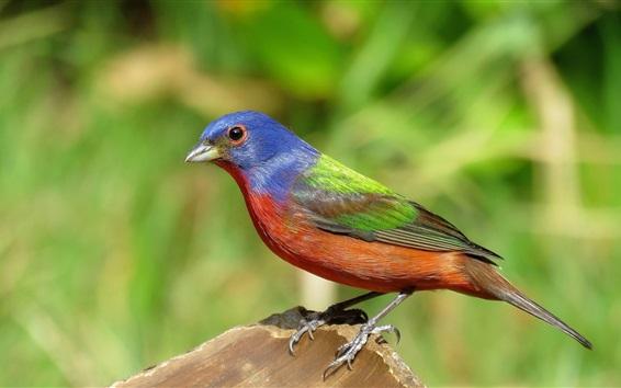 Wallpaper Bird, stump, colorful