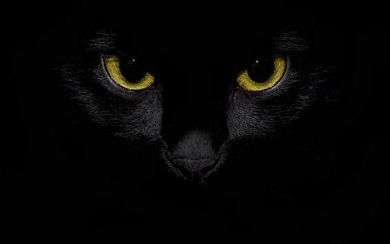 Papéis de Parede Vista frontal do gato preto, olhos amarelos, fundo escuro