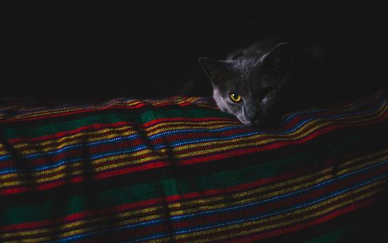 Wallpaper Black cat in the darkness