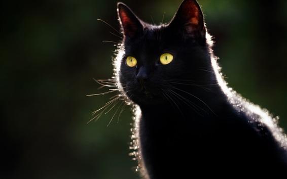 Обои Черная кошка, желтые глаза, подсветка, темный фон