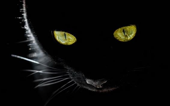 Papéis de Parede Olhos amarelos do gato preto, fundo preto, luz de fundo