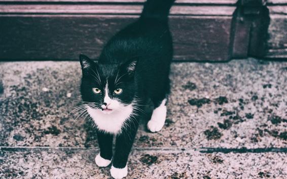 Обои Черный котенок, прогулка