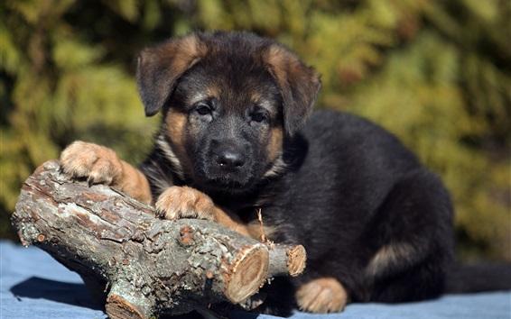 Papéis de Parede Filhote de cachorro preto e madeira