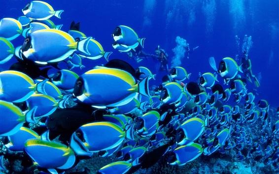 桌布 藍色的魚,海,水下