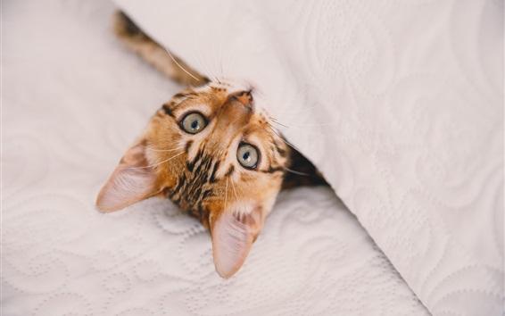 Fond d'écran Look mignon de chaton, tissu