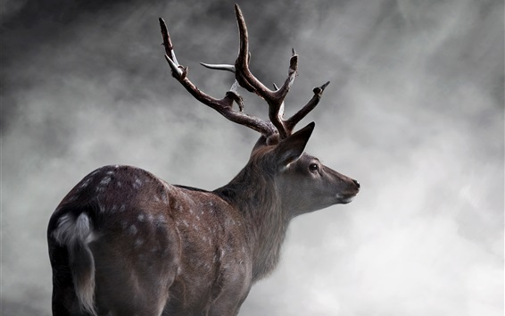 Wallpaper Deer rear view, fog, morning
