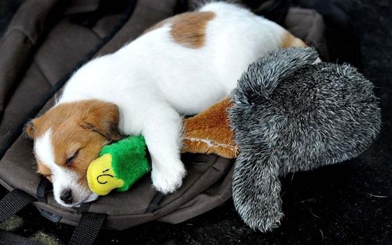 Papéis de Parede Cão de sono, pato de brinquedo