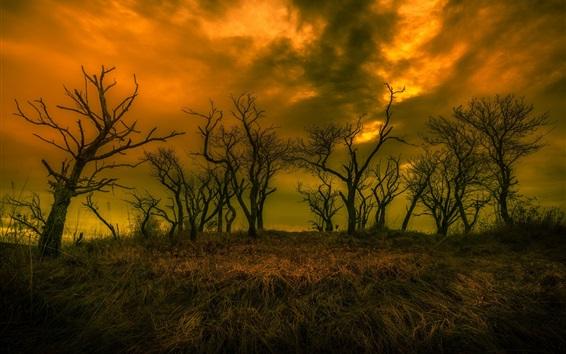 Fond d'écran Crépuscule, herbe, arbres, nuages, automne