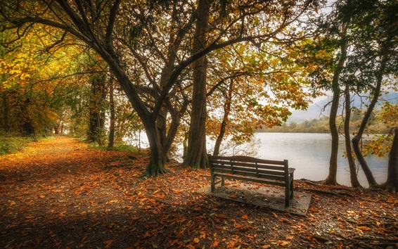 Wallpaper England, Cumbria, lake, leaves, trees, bench