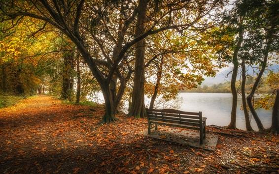壁紙 イギリス、カンブリア、湖、葉、木々、ベンチ