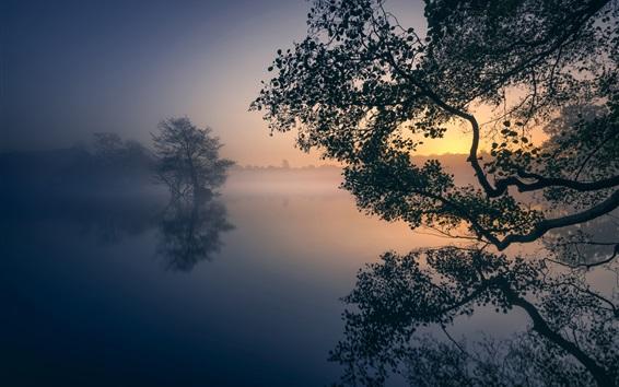 壁紙 イングランド、ロンドン、テムズ、ペン池、木々、霧、朝