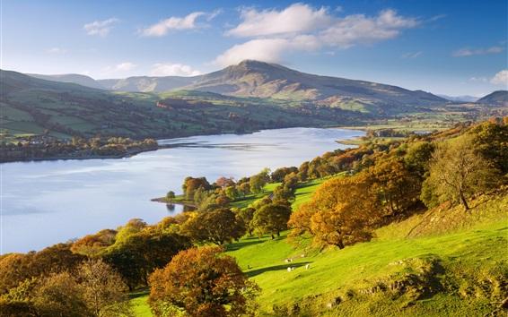 Fond d'écran Parc National d'Exmoor, Royaume-Uni, automne, arbres, rivière, pente