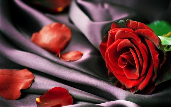 Wallpaper Fabric, red rose, petals