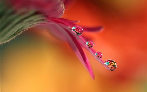 Wallpaper Flower pink petals, water drops, macro photography