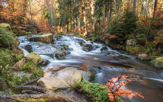 Wallpaper Forest, stones, creek, autumn, Germany