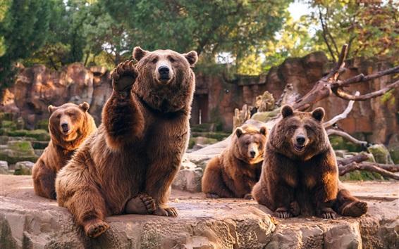 Papéis de Parede Quatro ursos marrons, pedras