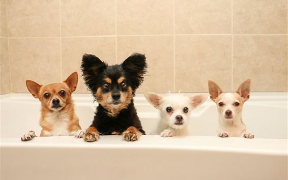 Wallpaper Four dogs in bathroom