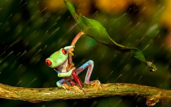 Fond d'écran Grenouille sous la pluie, feuille