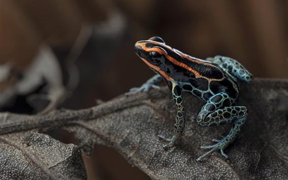 Wallpaper Frog, leaf