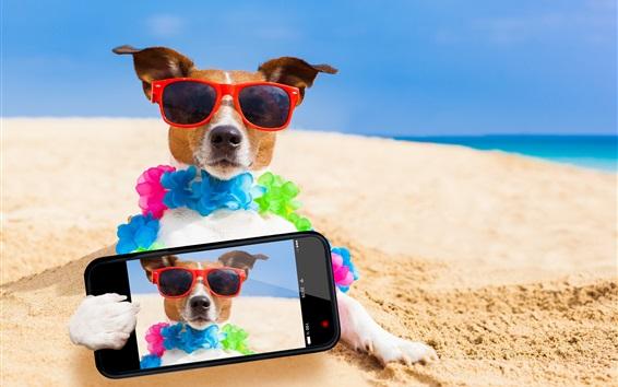 Papéis de Parede Cachorros engraçados usam telefone para fotografia, óculos de sol