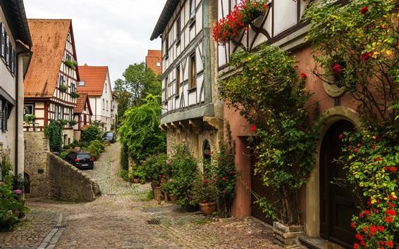 Обои Германия, Wimpfen, улица, дома, цветы