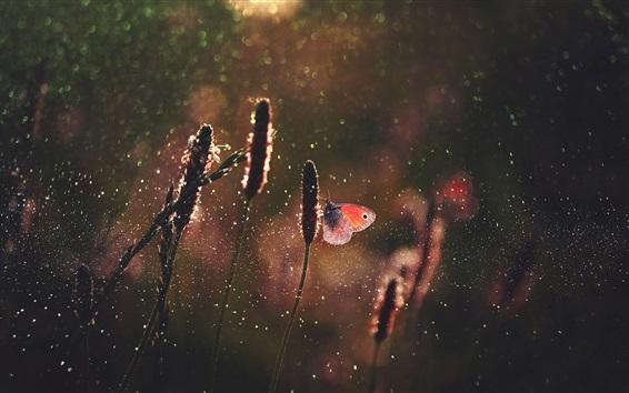 Wallpaper Grass, butterfly, rain