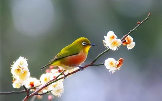 Papéis de Parede Pássaro de pena verde, flores, galhos, primavera