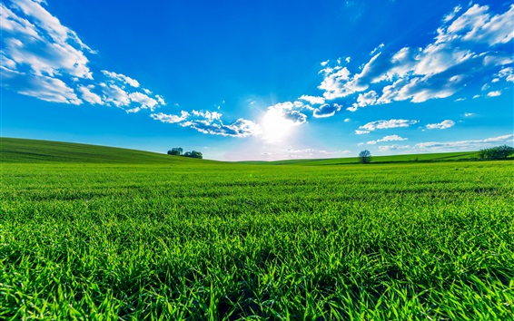 Fond d'écran Champs verts, ciel bleu, nuages, soleil, bel été