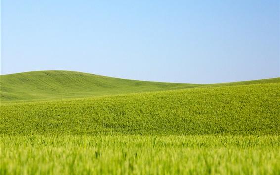Papéis de Parede Campos de trigo verde, céu azul