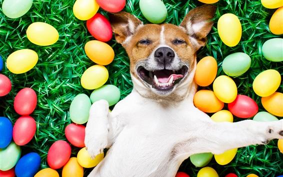 Обои Счастливая собака, красочные яйца, трава