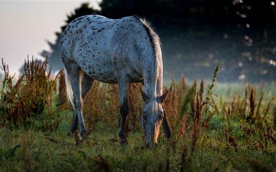 Fond d'écran Cheval manger de l'herbe, crépuscule